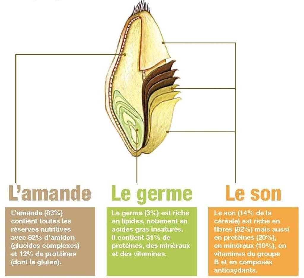 le germe de blé : qu'est ce que c'est ?