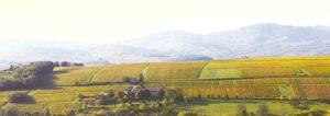 Le Domaine Albert en Beaujolais